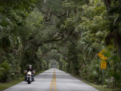 scenic fern covered tropical motorway